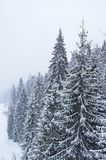 Inverno nei Carpathians ucraini Fotografie Stock