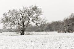 Inverno nel campo Fotografia Stock