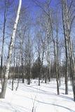 Inverno nel Canada immagine stock
