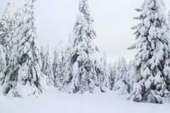 Inverno nel legno Immagine Stock Libera da Diritti