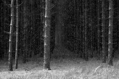 Inverno nel legno Immagini Stock Libere da Diritti