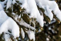 Inverno nel legno Fotografia Stock