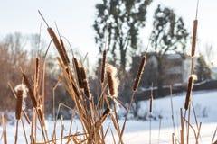 Inverno nel legno Fotografie Stock