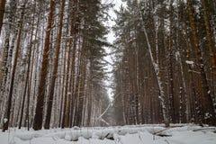 Inverno nel legno Immagini Stock