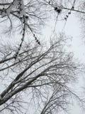Inverno nel Michigan immagini stock