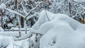 Inverno nel Montana 11 Fotografia Stock