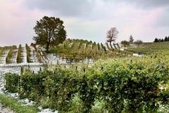 Inverno nel paese di vino Immagini Stock