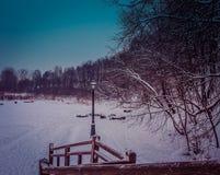 Inverno nel parco Immagini Stock Libere da Diritti