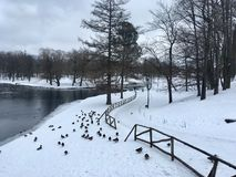 Inverno nel parco fotografia stock libera da diritti