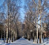 Inverno nel parco della città Immagine Stock Libera da Diritti