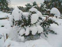 Inverno nel parco della città della città Fotografie Stock