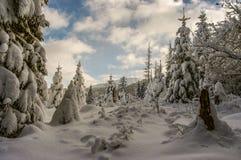 Inverno nel Tatras Fotografia Stock
