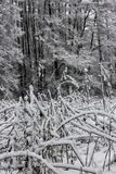 Inverno nel villaggio Fotografie Stock Libere da Diritti