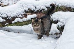 Inverno nel villaggio Fotografia Stock