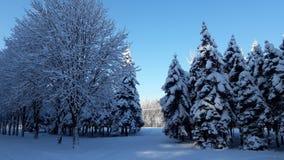 Inverno nella città fotografie stock