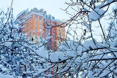 Inverno nella città fotografia stock libera da diritti