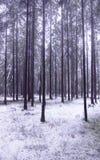 Inverno nella foresta immagine stock libera da diritti