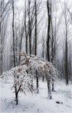 Inverno nella foresta fotografia stock libera da diritti