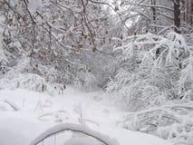 Inverno nella foresta Immagini Stock Libere da Diritti
