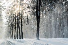 Inverno nella foresta con la polvere della neve sulle strade in Russia, Sibe Fotografie Stock