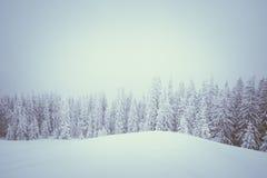 Inverno nella foresta dell'abete rosso della montagna Fotografie Stock Libere da Diritti