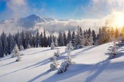 Inverno nella foresta della montagna fotografia stock libera da diritti