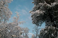 Inverno nella foresta fotografie stock