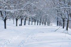Inverno nella sosta. Fotografie Stock