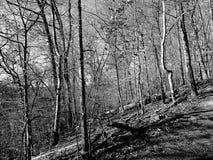Inverno nella sosta del Rock Creek Fotografie Stock