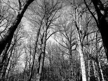 Inverno nella sosta del Rock Creek Fotografie Stock Libere da Diritti