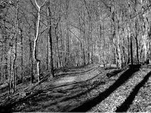 Inverno nella sosta del Rock Creek Fotografia Stock
