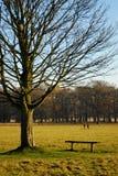 Inverno nella sosta di Richmond Fotografia Stock