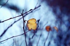 Inverno nella venuta Fotografie Stock
