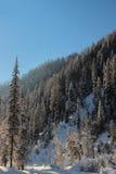 Inverno nelle montagne di Altai Immagine Stock