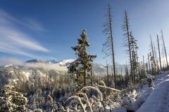 Inverno nelle montagne di Tatra fotografia stock
