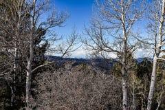 Inverno nelle Montagne Rocciose immagine stock