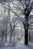 inverno nevado bonito fotografia de stock royalty free