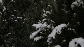 Inverno, neve, abete Fiocchi di neve di caduta archivi video
