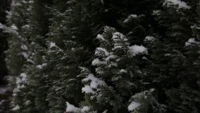 Inverno, neve, abete Fiocchi di neve di caduta stock footage