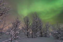 Inverno, neve, aurora, aurora boreale, notte, stelle Immagini Stock