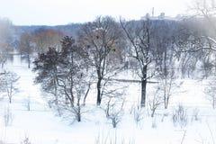 inverno, neve, paisagem, árvore, frio, floresta, árvores, natureza, branco, parque, estação, gelo, geada, céu, nevado, azul, estr imagem de stock royalty free