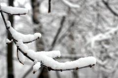 Inverno, neve su un ramo di albero fotografia stock