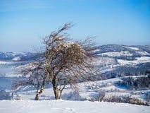 Inverno no campo imagem de stock royalty free
