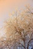 Inverno no nascer do sol fotografia de stock royalty free