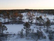 Inverno no pântano de Viru Fotografia de Stock Royalty Free