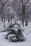 inverno no parque 5 imagens de stock royalty free