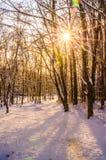Inverno no parque da cidade Fotografia de Stock