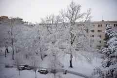 inverno no parque da cidade com os ramos de árvore cobertos com a neve Foto de Stock Royalty Free