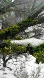 inverno no parque de Frazier Imagem de Stock