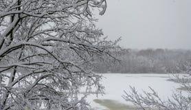inverno no parque, a neve encontra-se nos ramos das árvores Fotografia de Stock Royalty Free